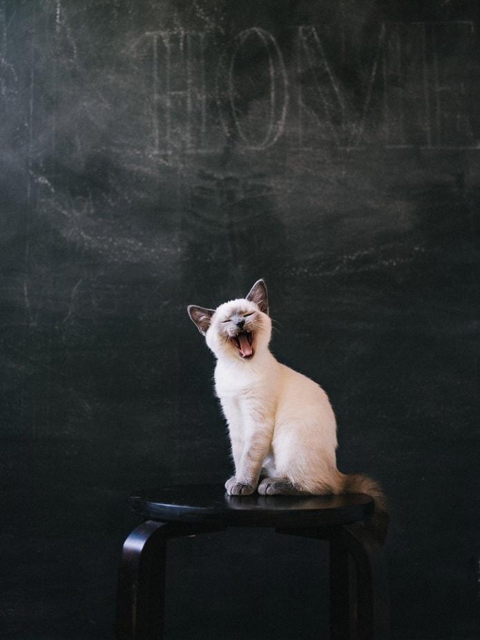 pentax 645z kitten photo