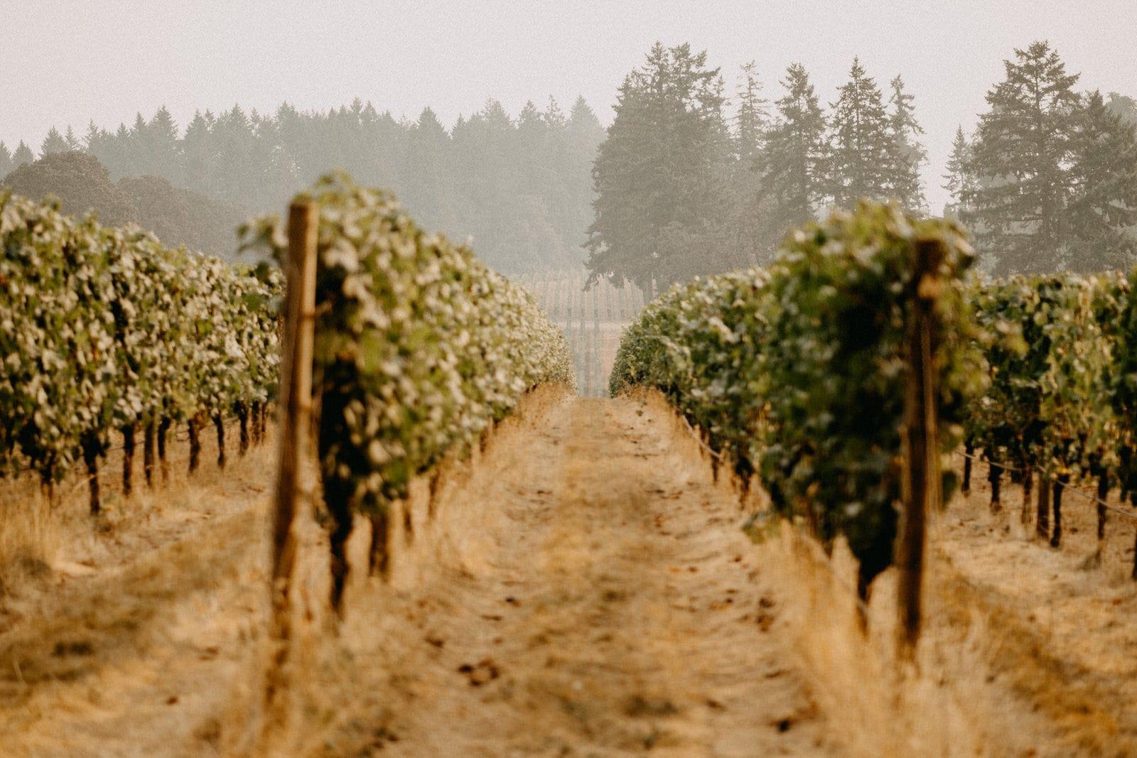 domaine de broglie vineyard in oregon